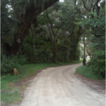 tree lined rocky dirt road leading to cemetery